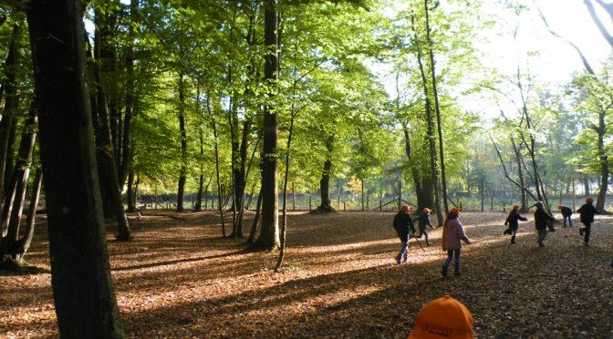 Waldtag im ersten Schuljahr